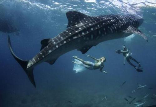 不过蓝鲸是世界上最大的动物!