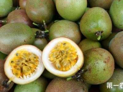 百香果种植技术 百香果要怎么种植才会提高产量