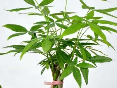什么植物容易种植 不知道种什么花才好