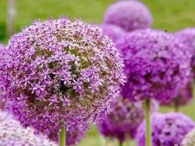 """湖南省省花是什么花 到省植物园看""""花花世界"""""""